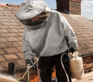 Wasp nest removal technician treating a wasp nest on a roof.